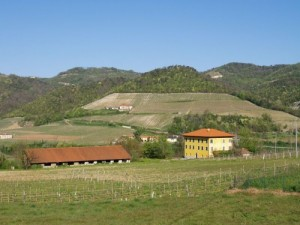 Estate with vineyard